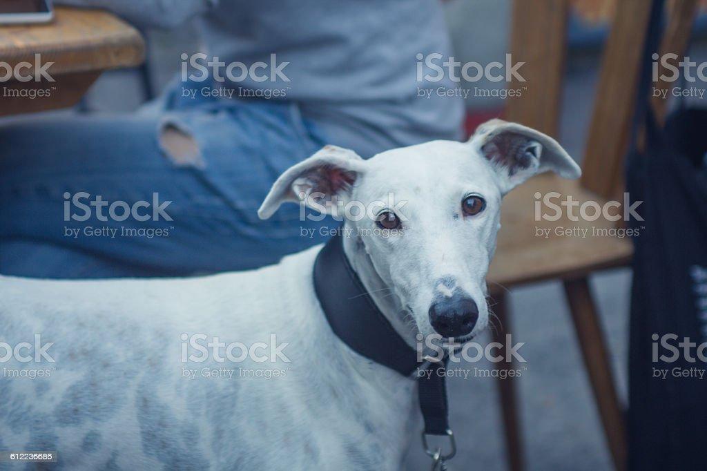 Greyhound Airlines stock photo