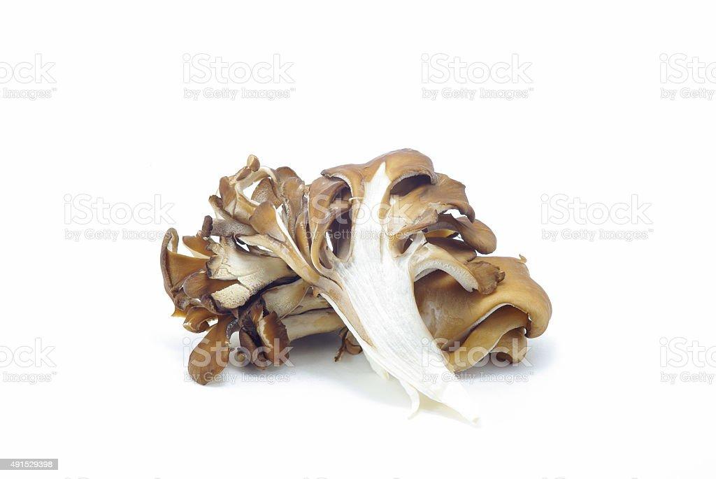 Grifola frondosa stock photo