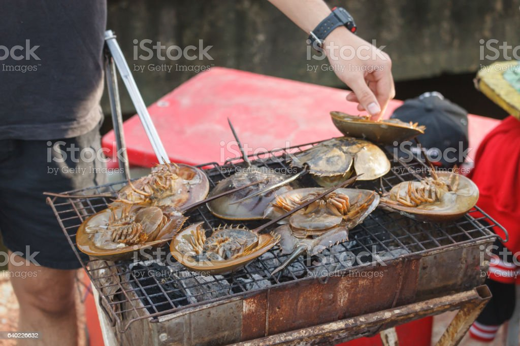 Grilled horseshoe crabs stock photo