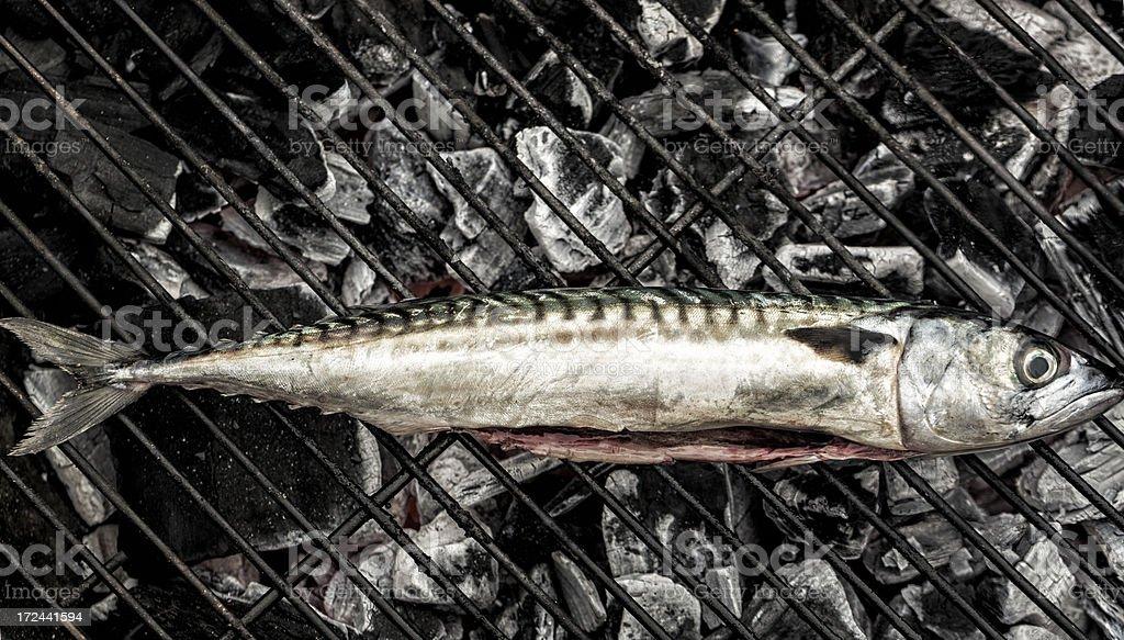 Grilling mackerel royalty-free stock photo