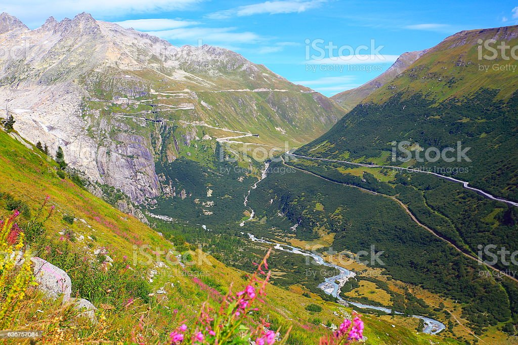 Grimsel and Furka mountain pass, flowerbed wildflowers, Swiss Bernese Alps stock photo