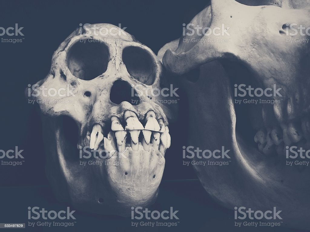 Grinning monkey skull stock photo