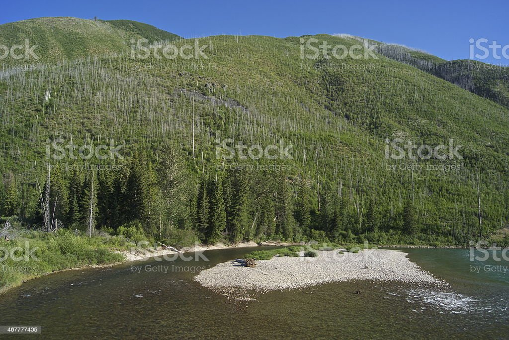 Grizzly Bear River stock photo