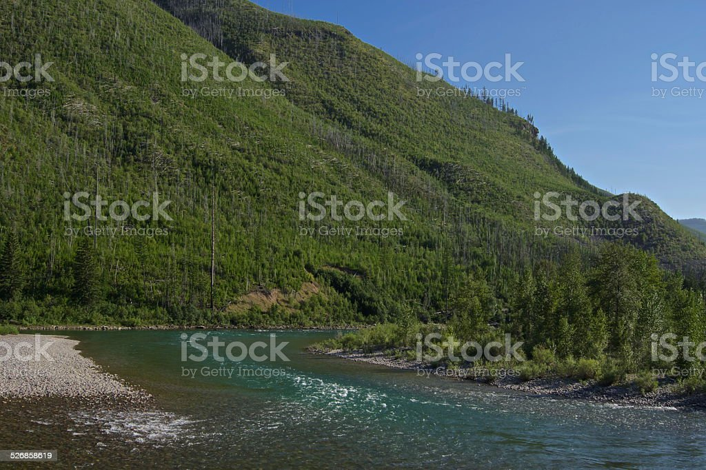 Grizzly Bear Water Source stock photo