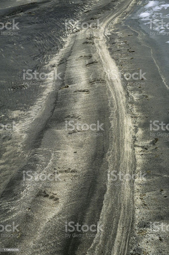 Grizzly tracks stock photo