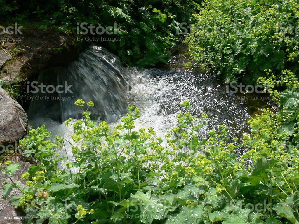 Grünpflanzen am Bach stock photo