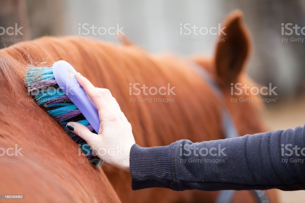 Grooming a Horse royalty-free stock photo