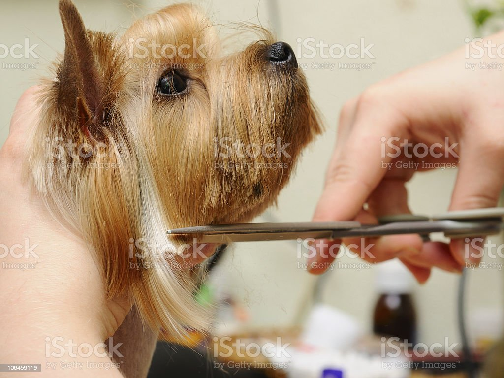 5 Mistakes Dog Groomers Make You Need To Watch Out For
