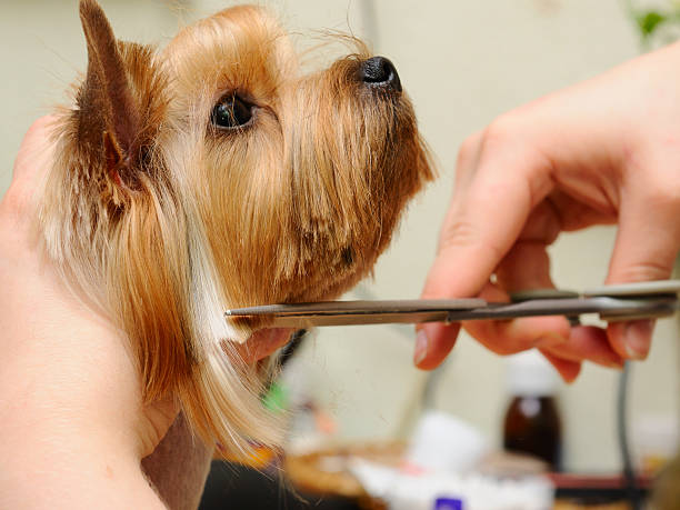5 Mistakes Dog Groomers Make