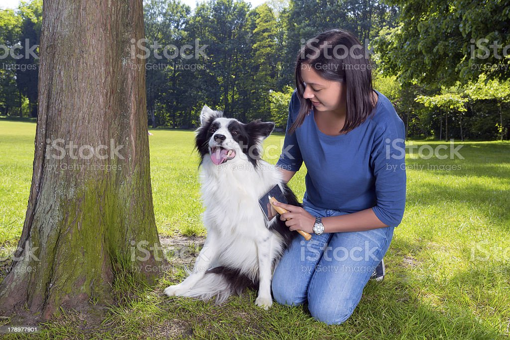 Grooming the dog royalty-free stock photo