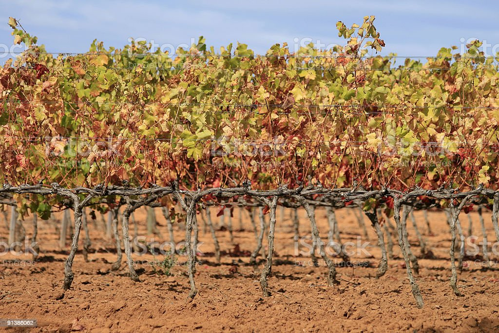 Groot Constantia in Cape Town, South Africa stock photo