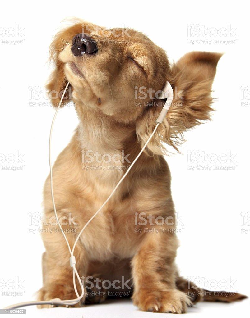 Groovin puppy stock photo
