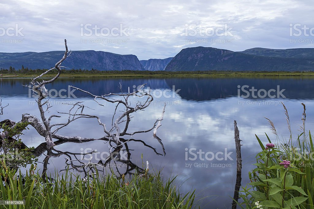 Gros Morne Pond Reflections royalty-free stock photo