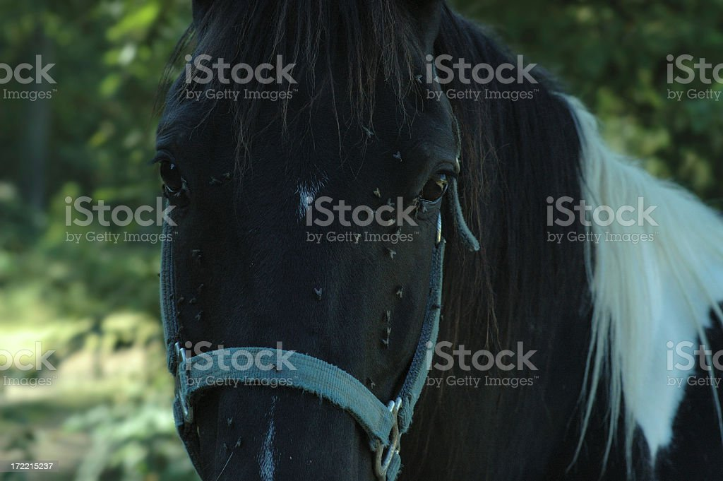gross horse stock photo