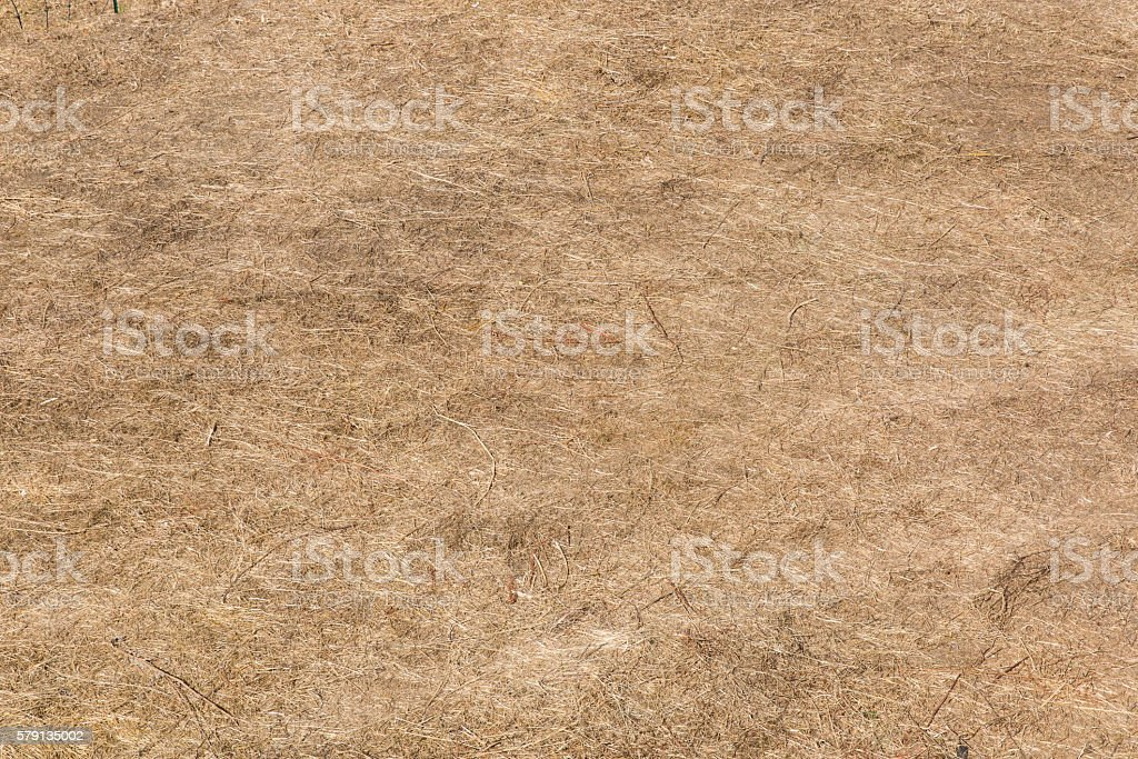 ground covered by withered grasses stock photo