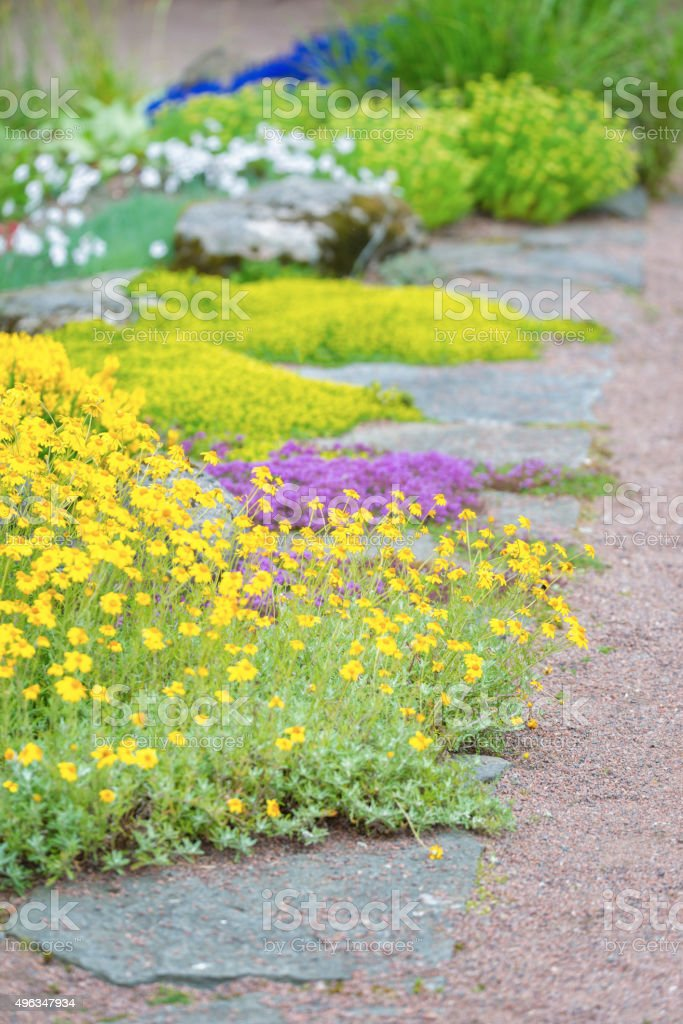 Ground covering plants stock photo