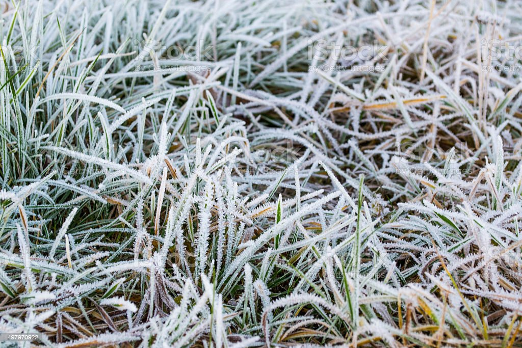 Ground frost on the meadow. Frost on the plants. stock photo