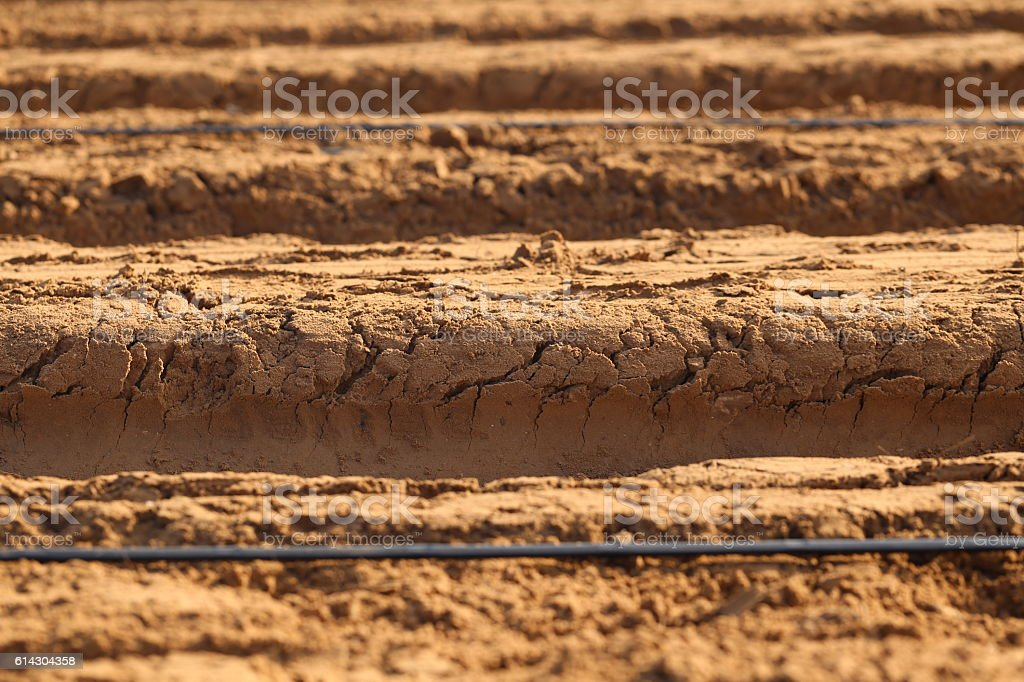 Ground Furrows, Close up. stock photo