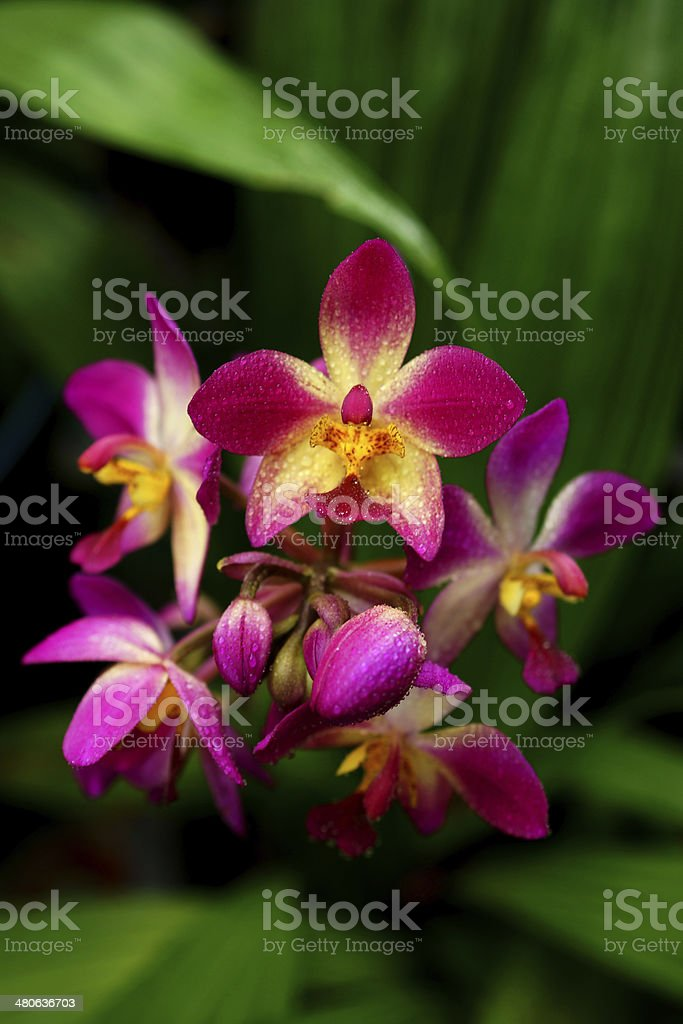 ground orchid flowers in the tropical rain forest royalty-free stock photo