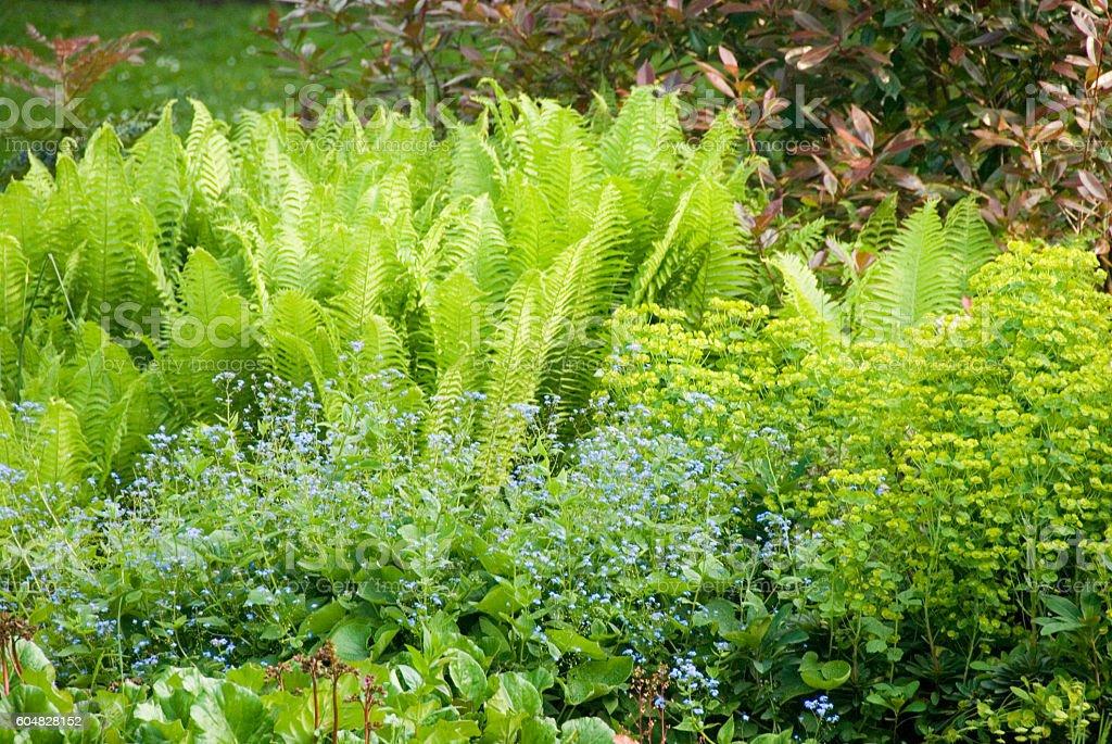 Ground Plants stock photo