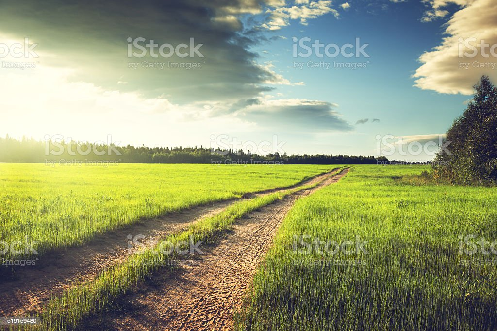 ground road and field of spring grass stock photo