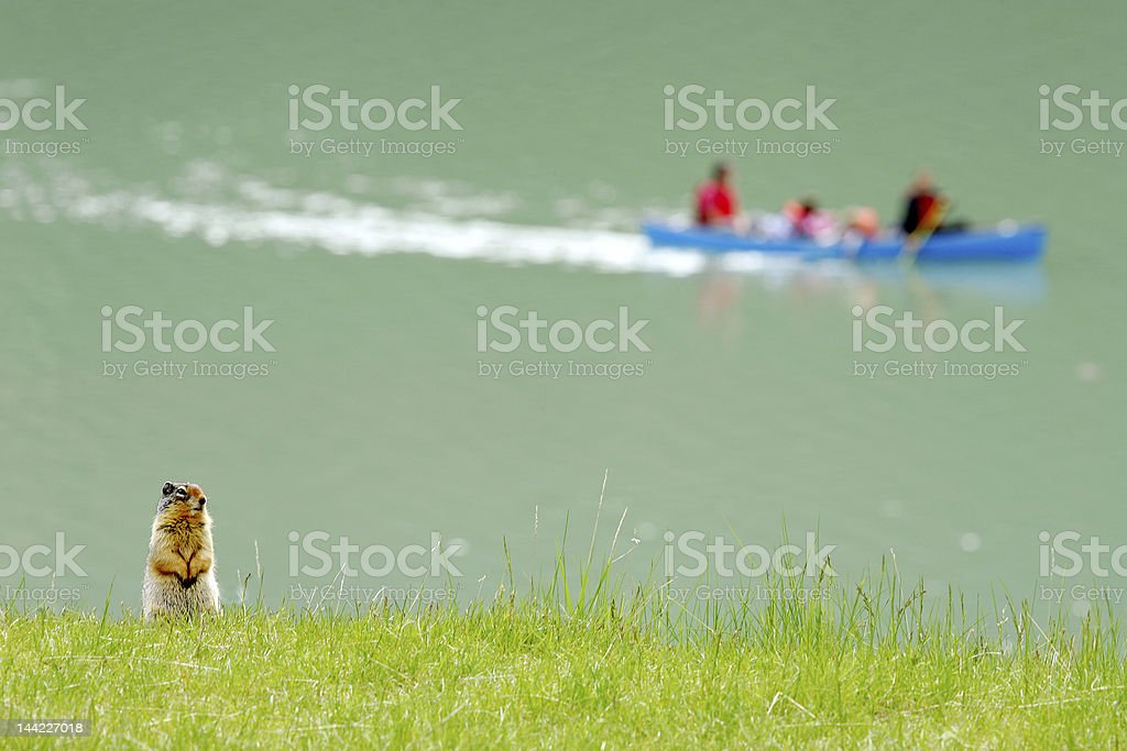 Ground squirrel and canoe royalty-free stock photo