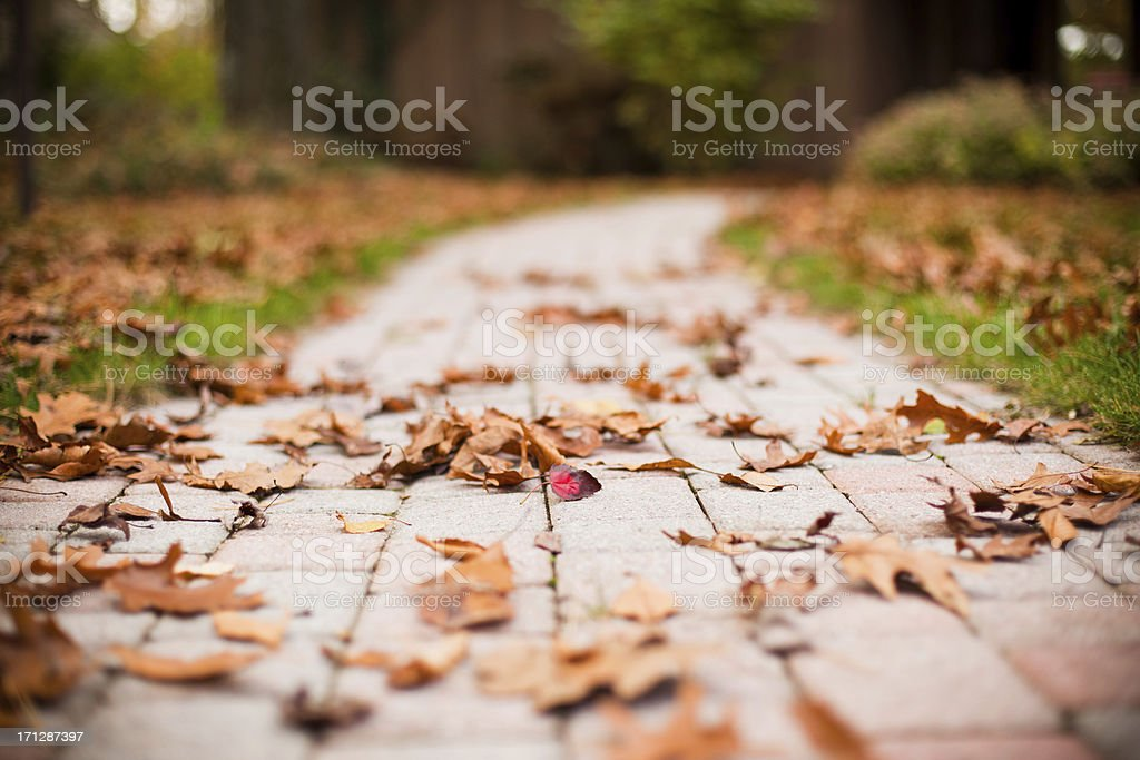 Ground view of a red brick walkway covered in fall leaves stock photo