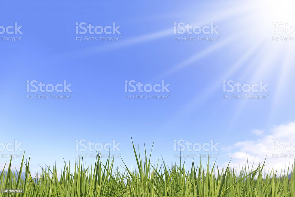 Ground view of grass with blue sky and sun stock photo