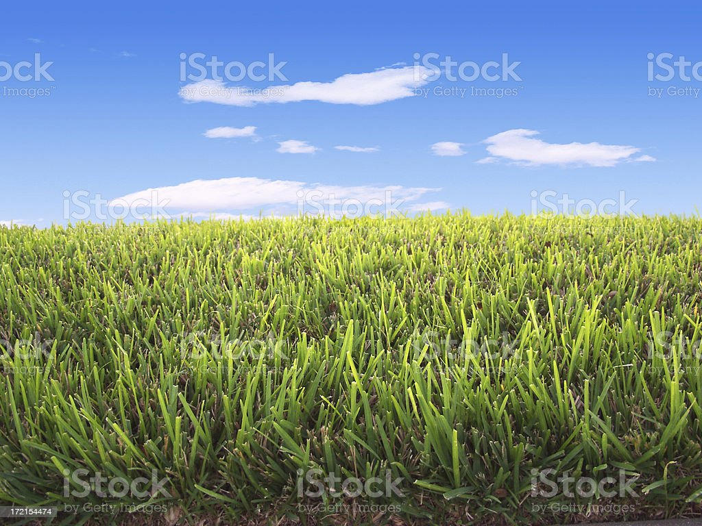 Ground view of green grass meeting blue sky at horizon royalty-free stock photo