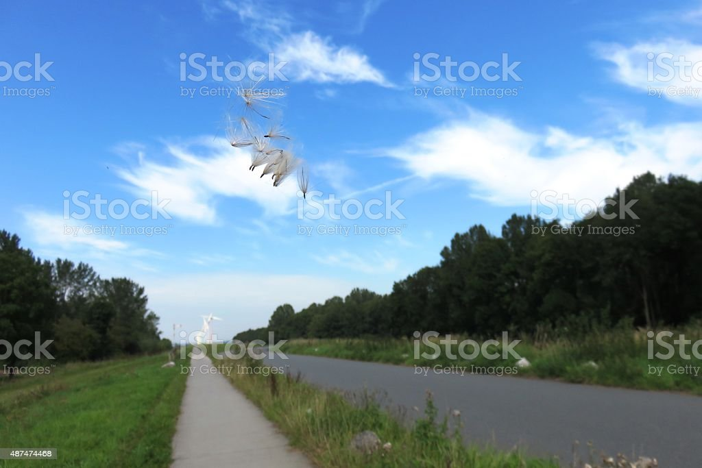 Groundsel in the wind stock photo