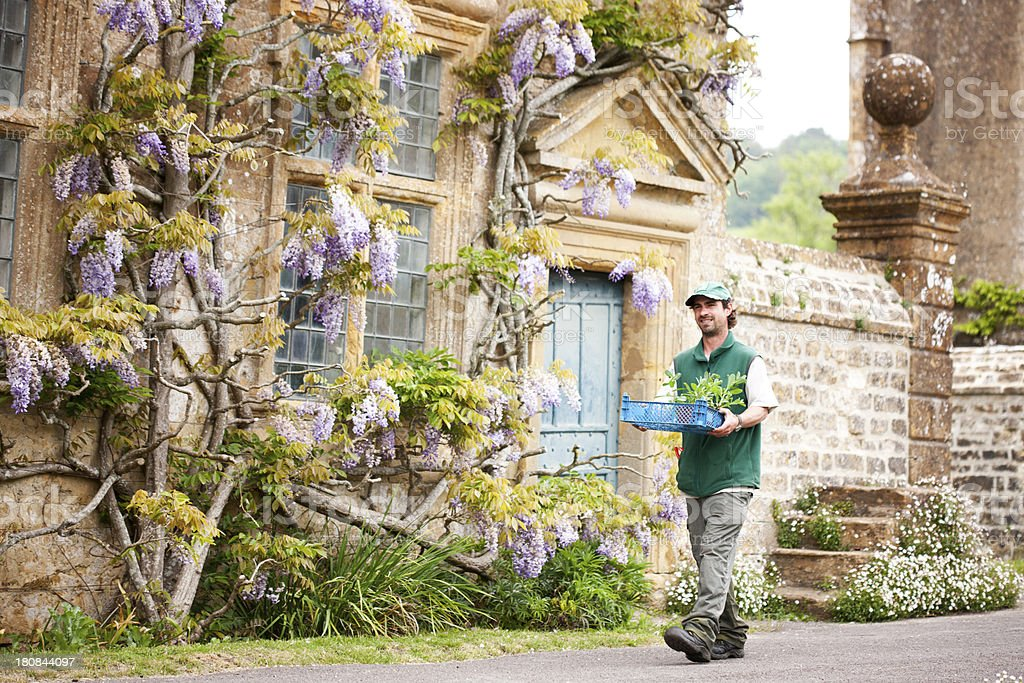 Groundsman and wisteria stock photo