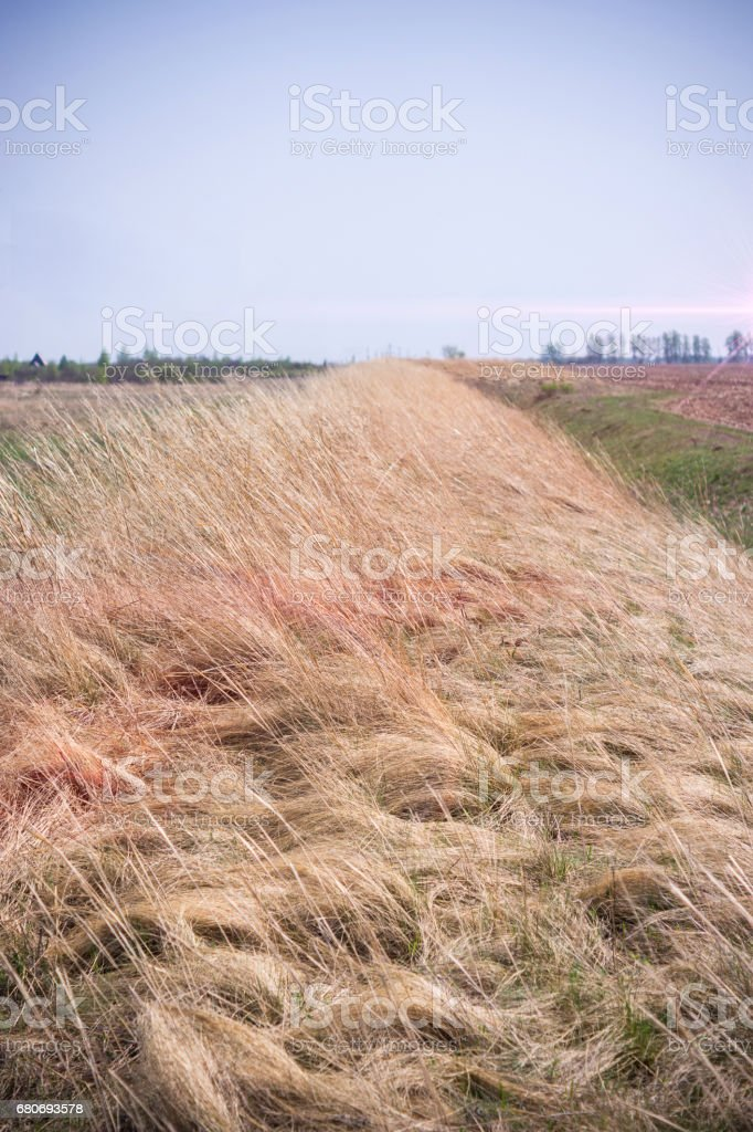 groundwork with dry grass stock photo