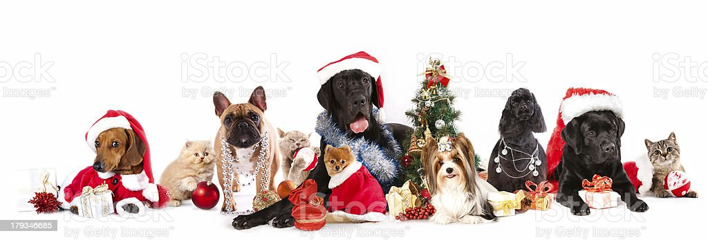 group dog and  cat stock photo