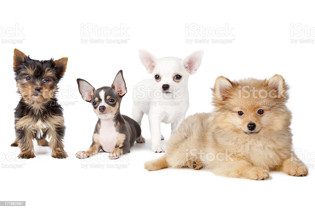 Group dogs stock photo