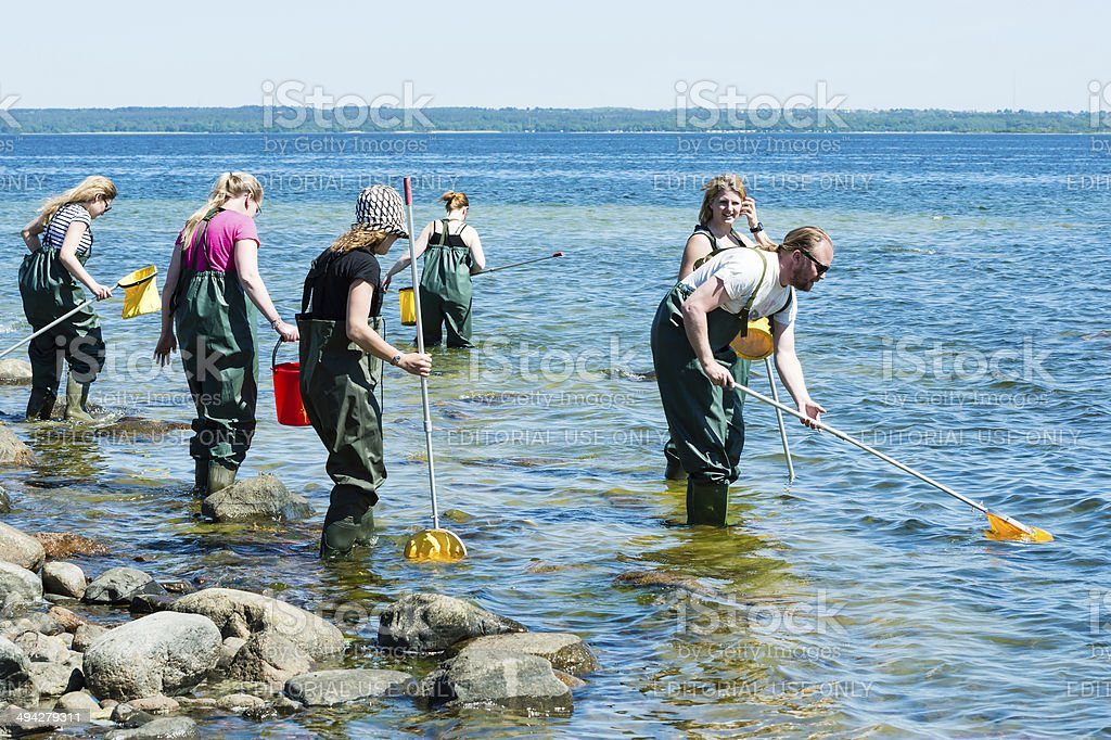 Group examining water with ring nets stock photo