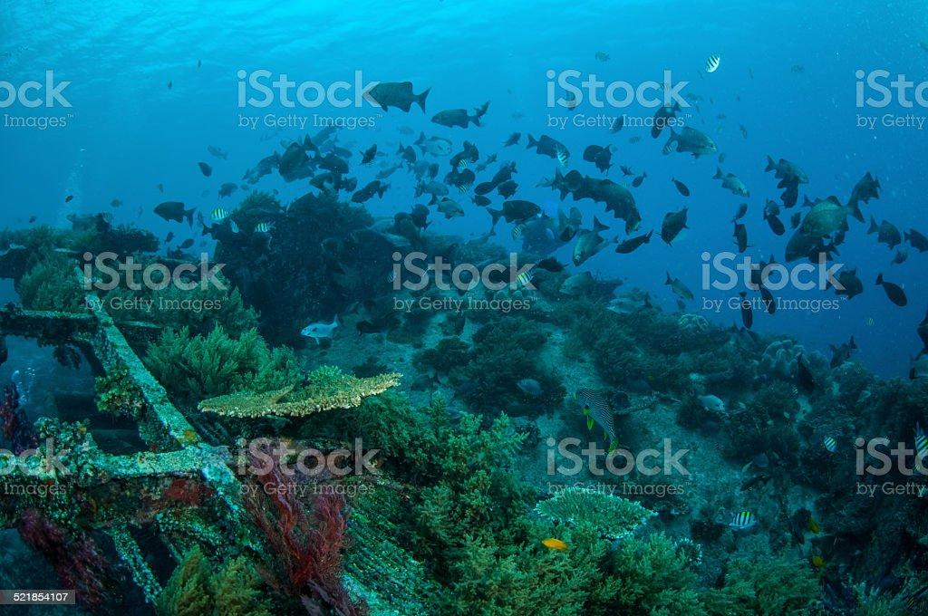 Group fishes in Gili, Lombok, Nusa Tenggara Barat, Indonesia underwater stock photo