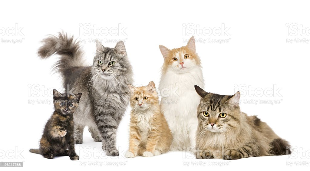 Group of 4 cats in a row stock photo