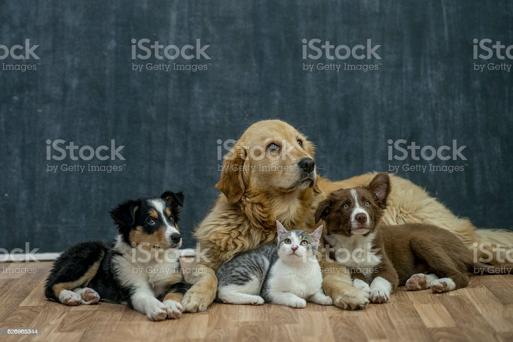 Group of Animals stock photo