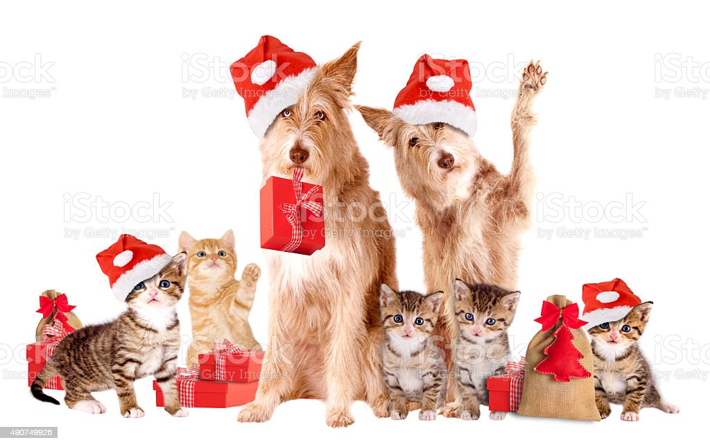 Group Of Animals with Santa hats and presents stock photo