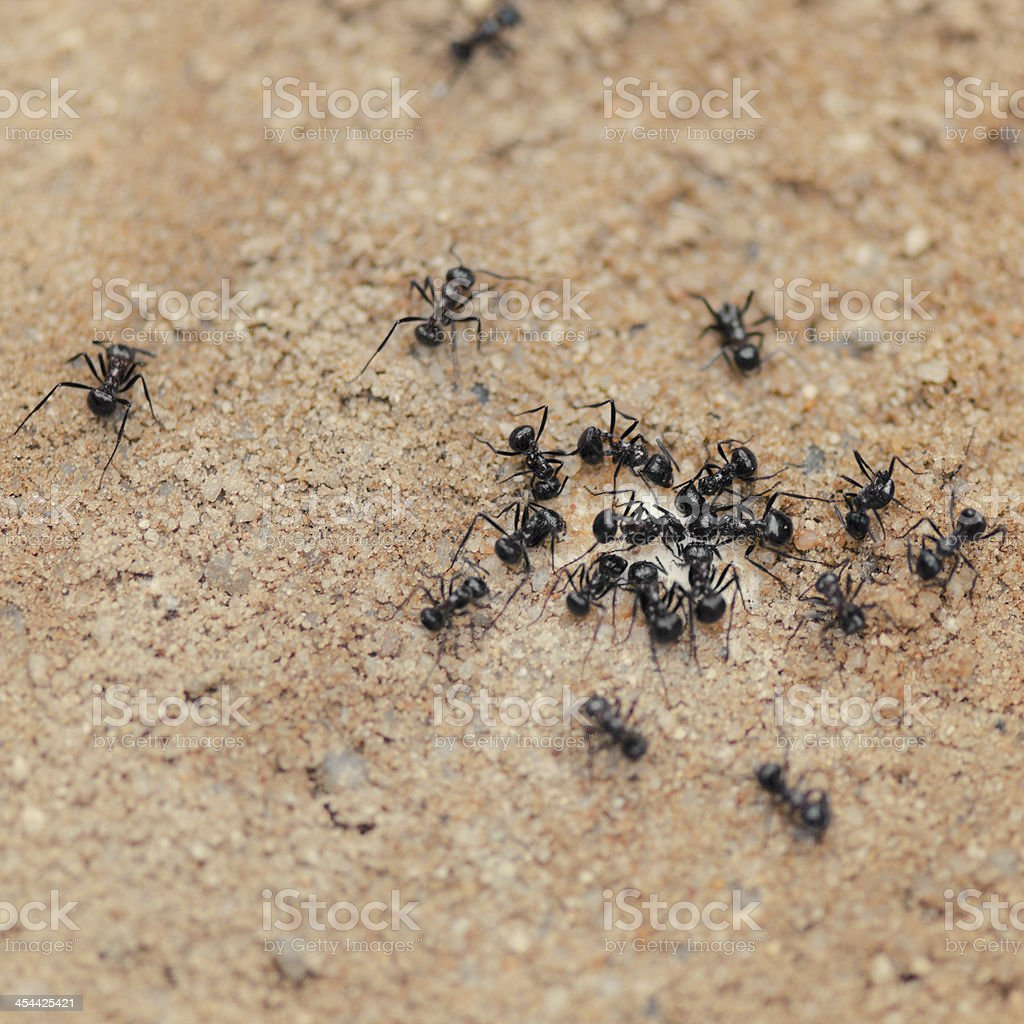 Group of Ants stock photo