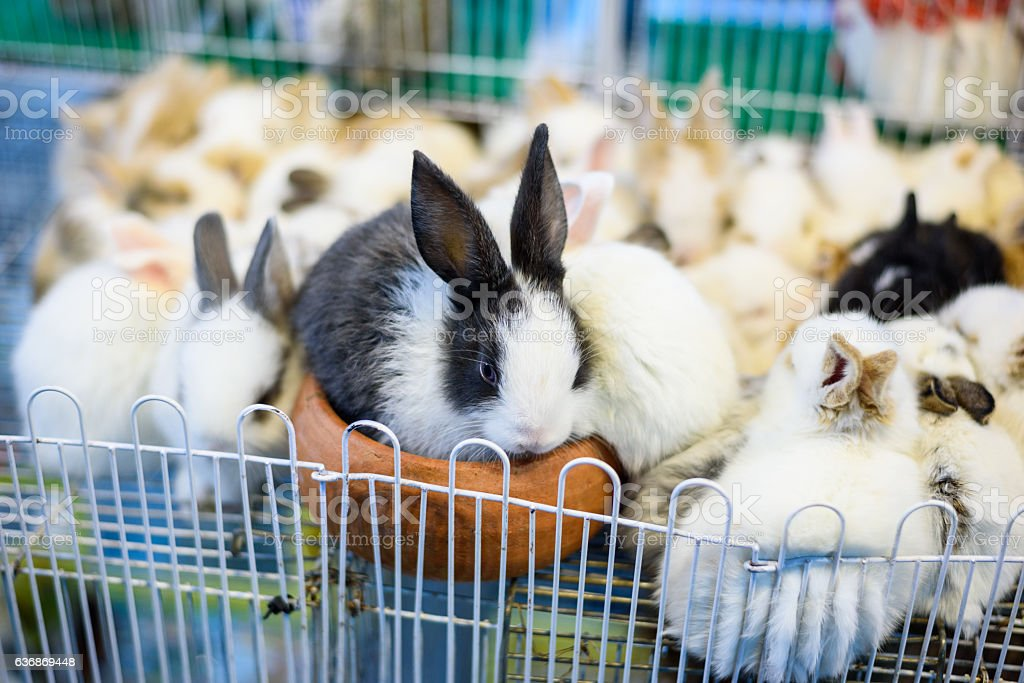 Group of baby adorable rabbit stock photo