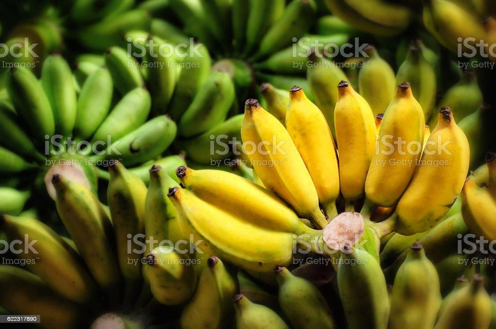 Group of banana stock photo