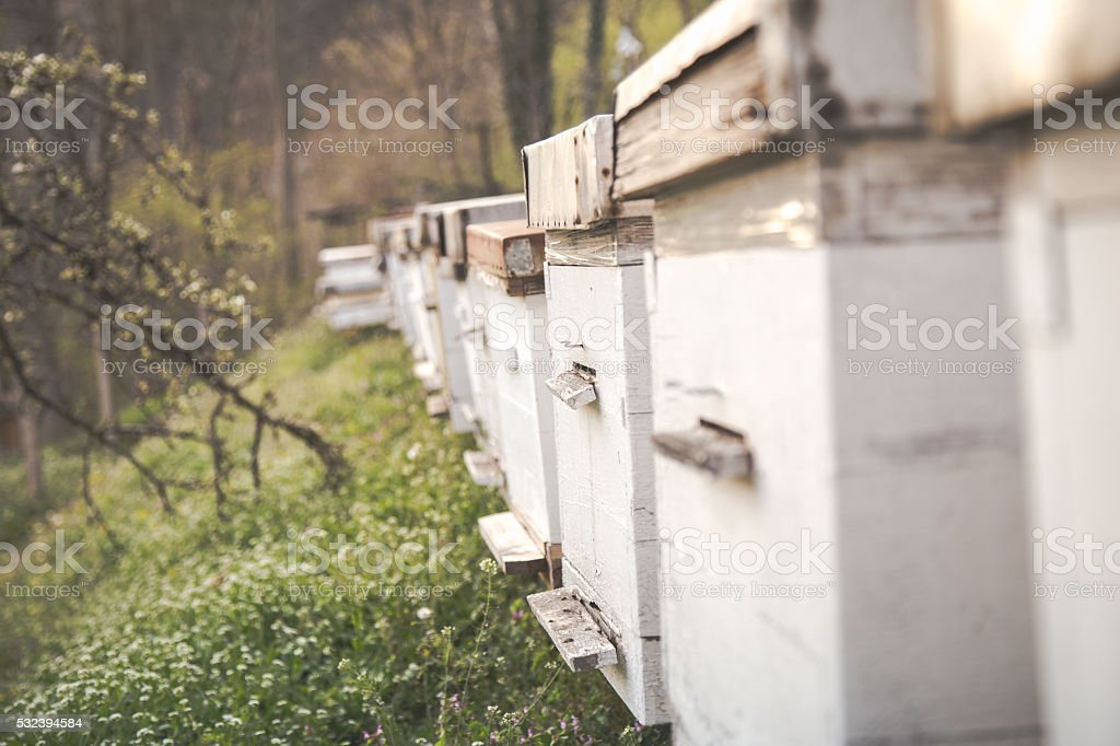 Group of Bee Hives stock photo