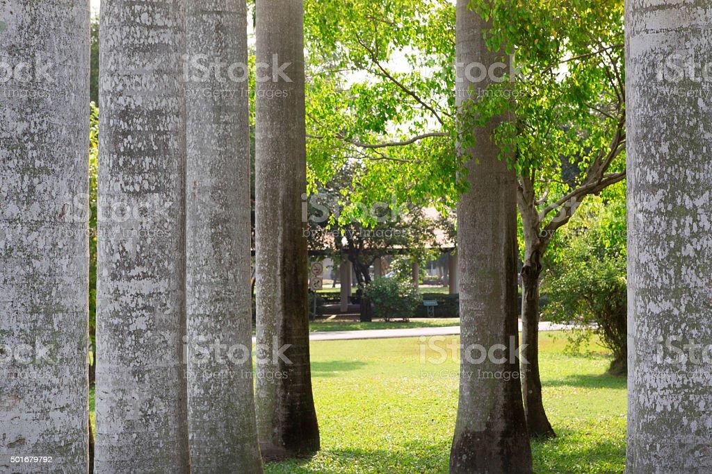 Group of betel trees in garden stock photo
