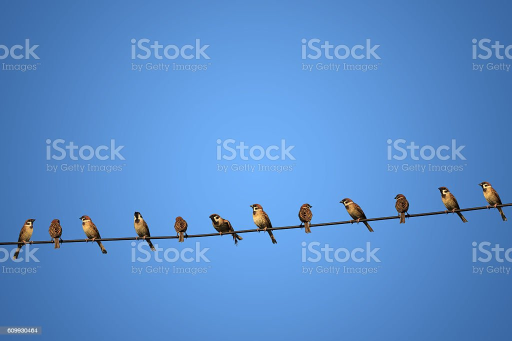 group of birds on a power  line concept of risk stock photo