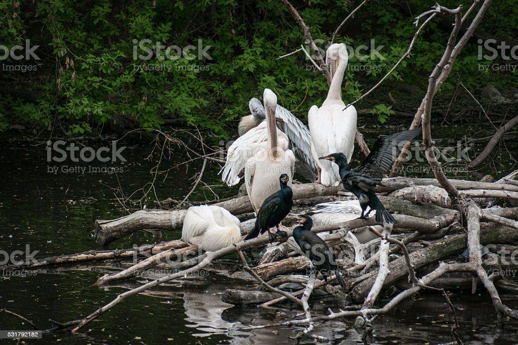 Groupe d'oiseaux photo libre de droits