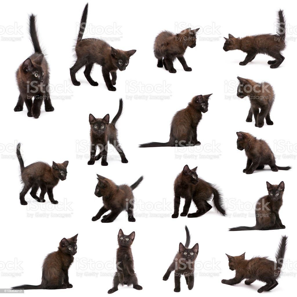 Group of black kittens in front of white background stock photo