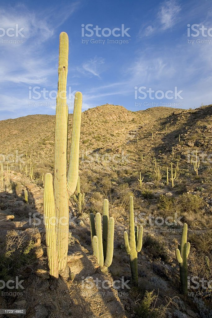 Group of cactus stock photo