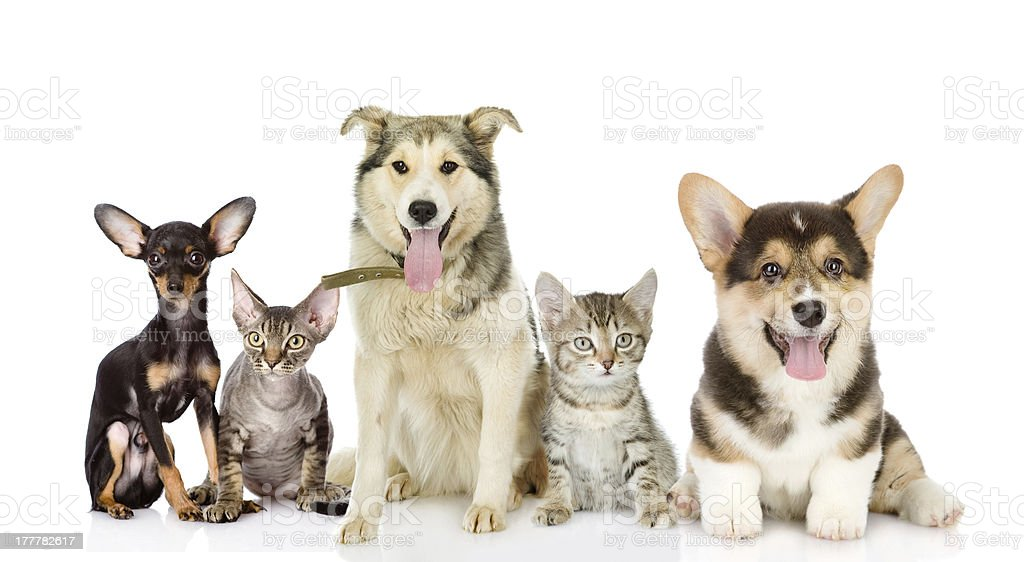 Group of cats and dogs in front stock photo
