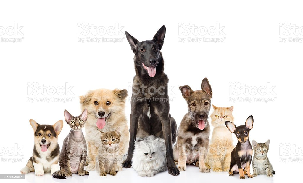 Group of cats and dogs in front royalty-free stock photo